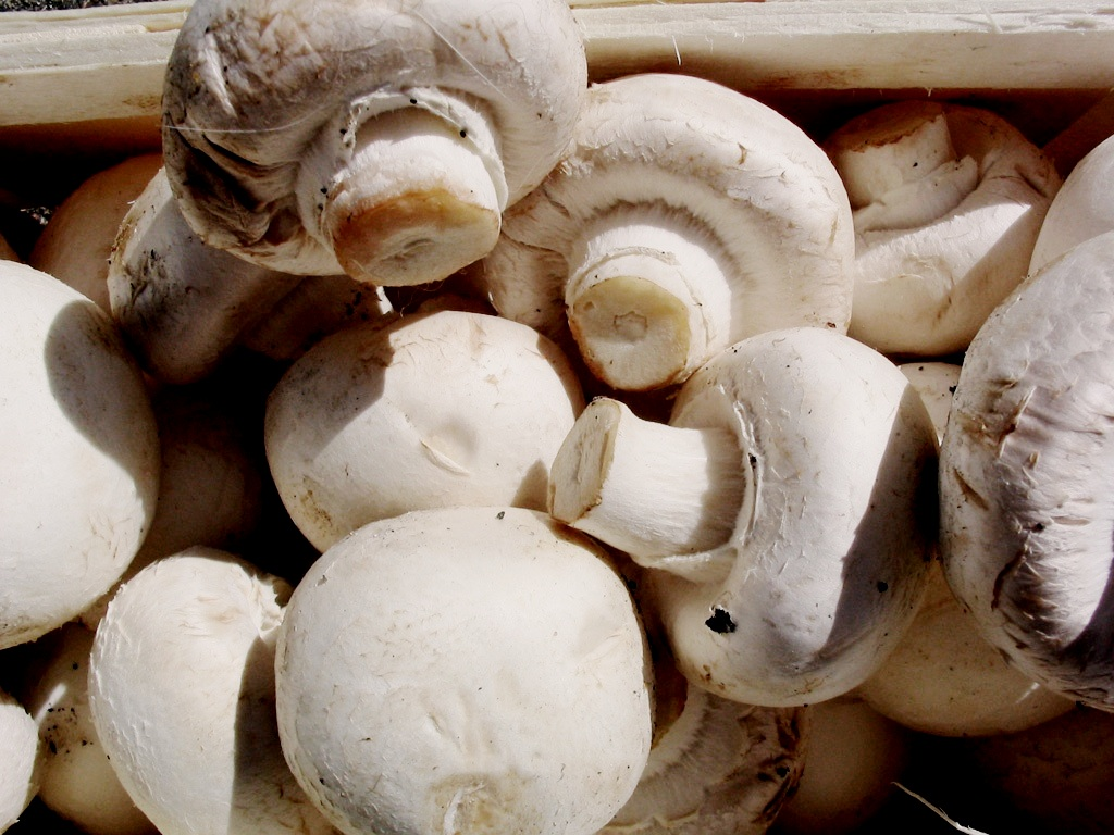 eating mushrooms twice was found to have an 8 percent lower risk of prostate cancer.